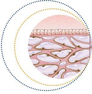 Découverte d'un nouvel organe du corps humain : l'interstitium